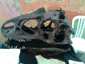 Allosaur Skull of Hidden Horizons