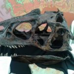 SARAS Attend First Yorkshire Fossil Festival